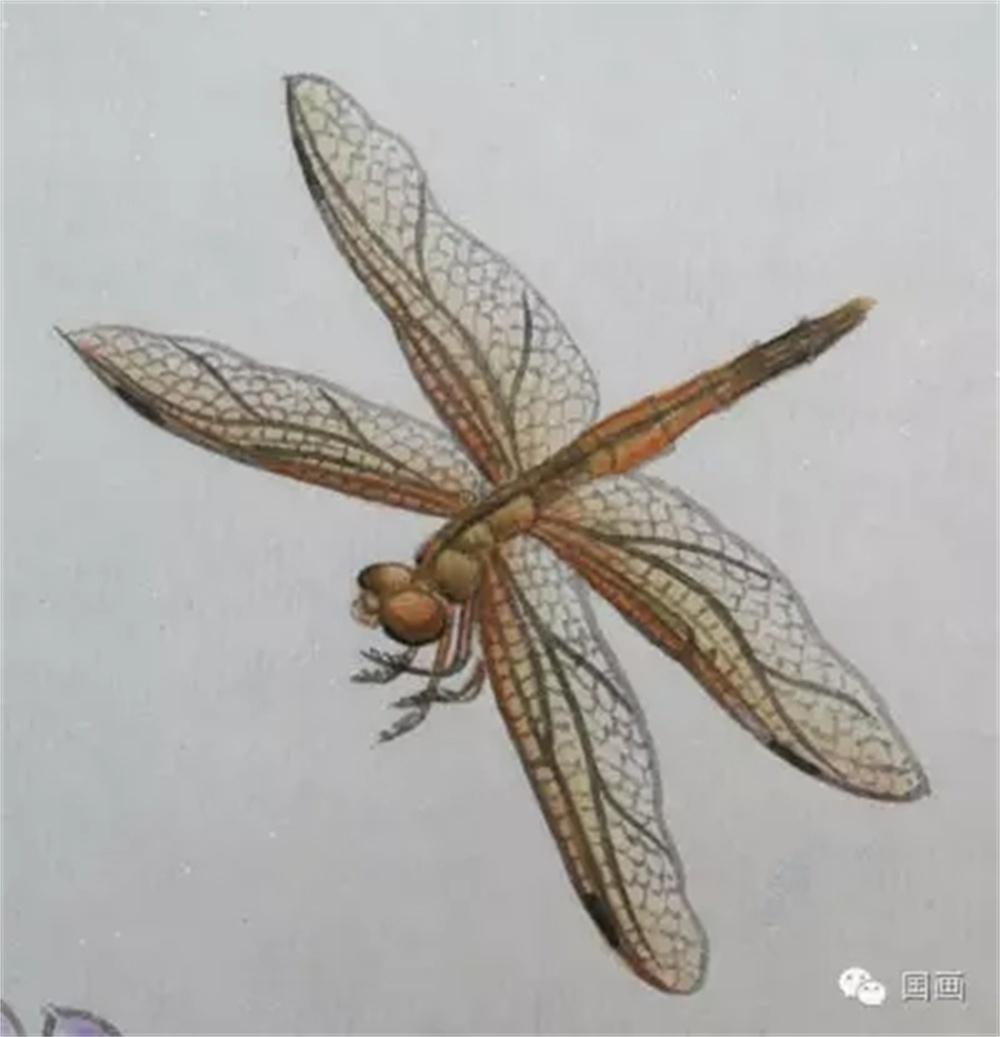 教程:蜻蜓和蚱蜢的工笔画法
