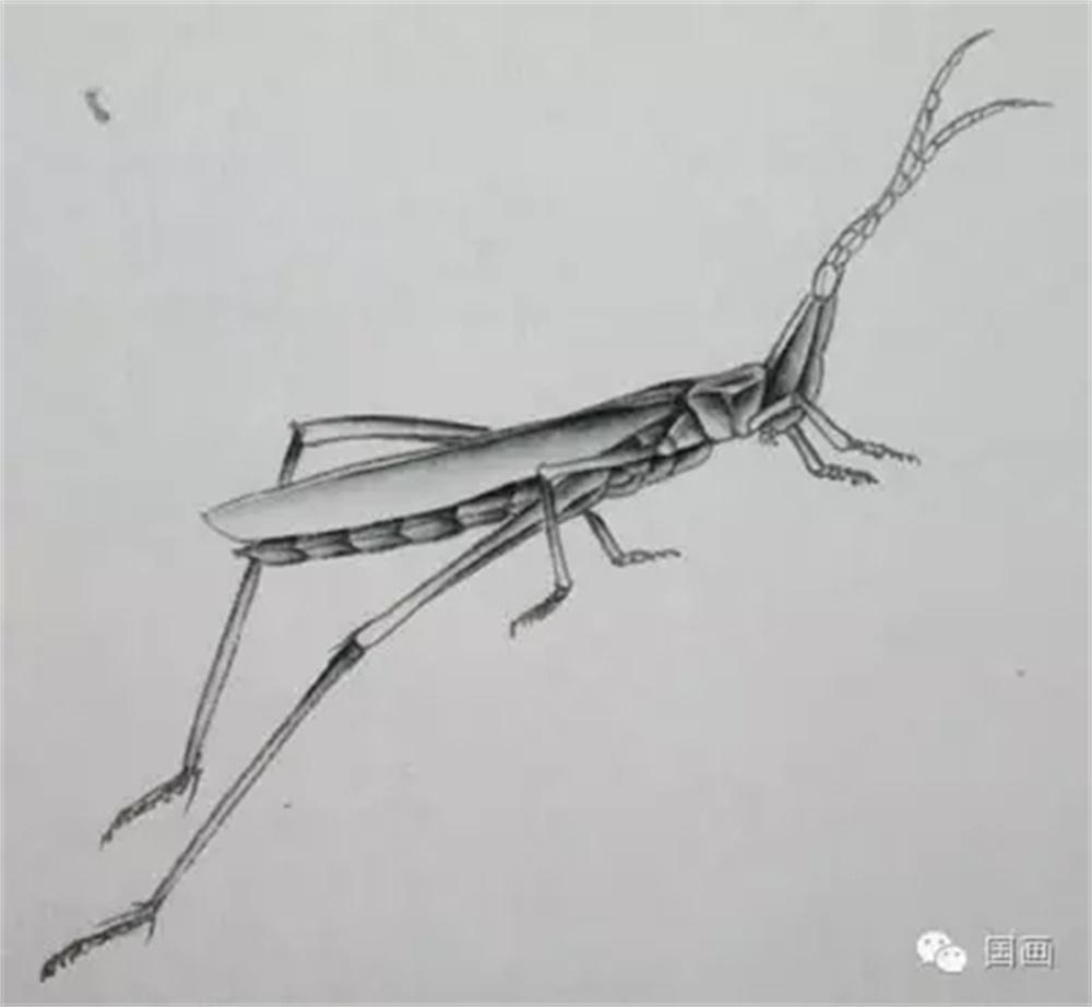蜻蜓,有翅亚纲的1目。全世界都有分布,尤以热带地区为多。已知约5000种,中国记载约350种。本目成员多数为大、中型昆虫,体长 20~150毫米,颜色艳丽。头大且转动灵活,复眼,面部下面有咀嚼式口器。两对翅膜质透明,翅多横脉,翅前缘近翅顶处常有翅痣。前胸较细如颈,中、后胸合并,称合胸。腹部细长,腹部圆筒形或扁形,10节。足接近头部,细长。飞行时,中足和后足可伸向头部前方,便于捕捉空中飞虫。停息时,足常抱附于植物枝叶上。